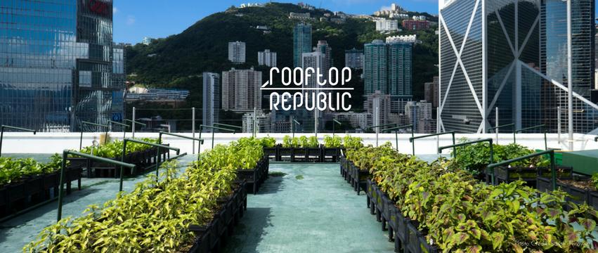 rooftop republic, rooftop garden, plant